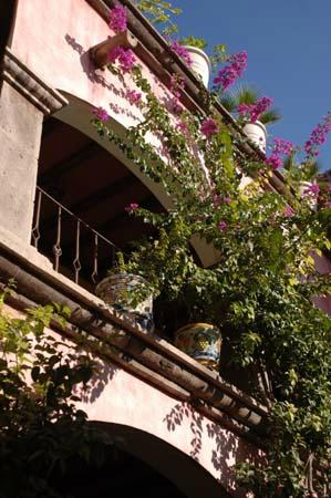 Posada de las Flores Loreto: Climbing bouganvilleas
