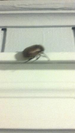 South Yarmouth, MA: Cockroach in our room.