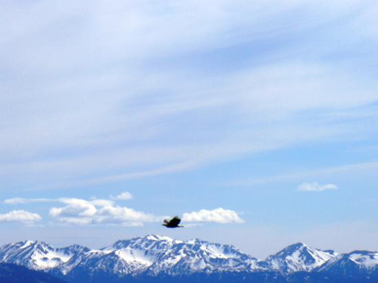 Alaskan Suites: Soaring Eagle