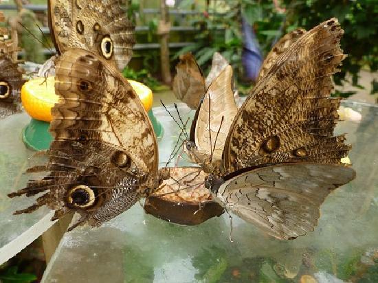 Maximilianpark: Im Schmetterlingshaus