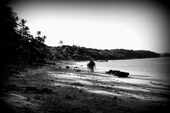 Namuka Bay Lagoon Resort: Horseback riding