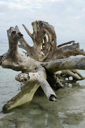 Namuka Bay Lagoon Resort: Driftwood