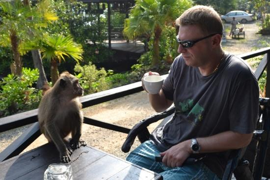 Nirvana Resort Koh Chang : love the monkeys