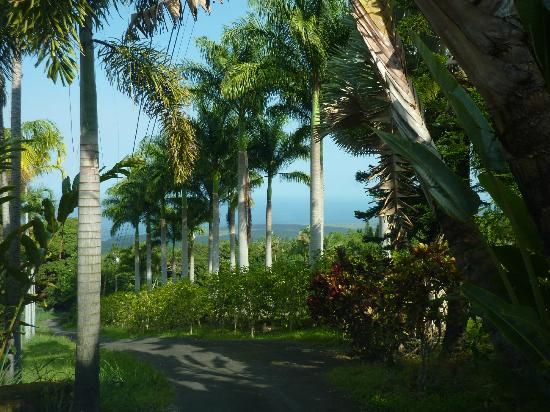 Aloha Guest House: A view from the road.