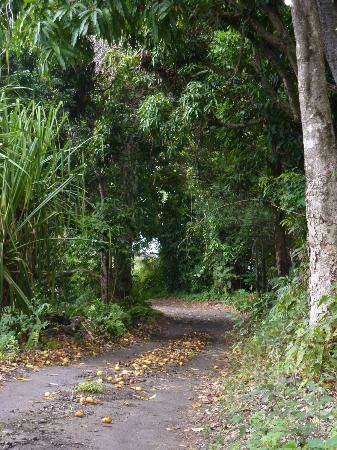 Aloha Guest House: The roat to on up, you crash mango, catastrophe.:))) 