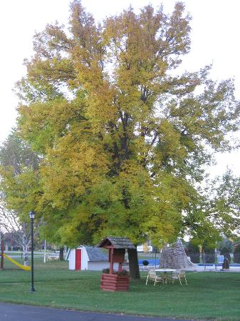 Day's End Motel: Maple tree in front