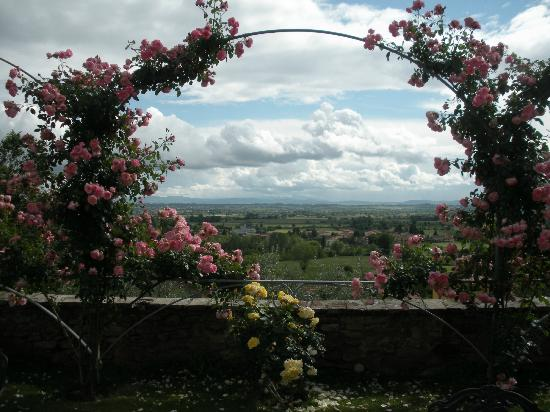 Restaurant Il Falconiere: Such a beautiful vista framed by arches of roses... a Tuscan vision.