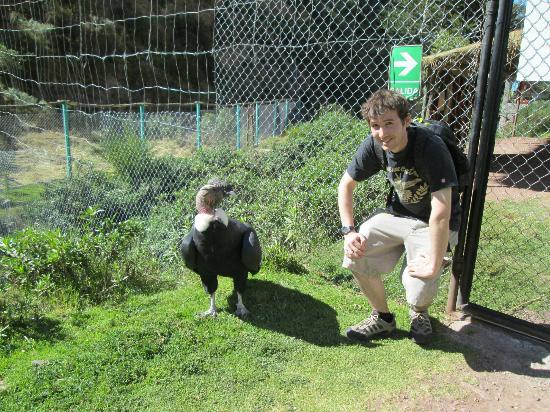 Santuario Animal de Cochahuasi: male condor and me