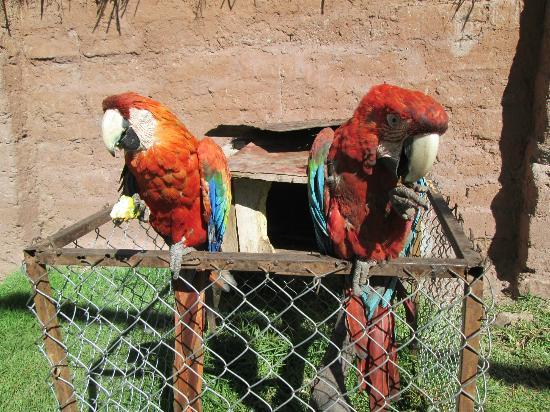 Santuario Animal de Cochahuasi: parrots healing