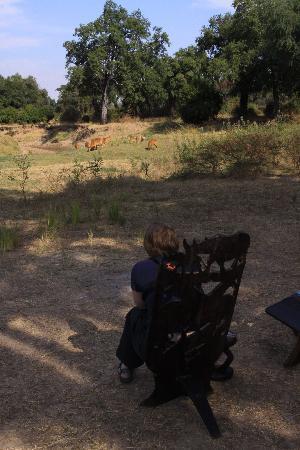 Shenton Safaris Mwamba Bush Camp : Mwamba bushcamp visitors
