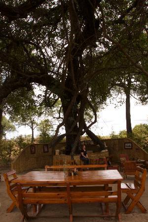 Mwamba Bushcamp (Shenton Safaris) : Dining area
