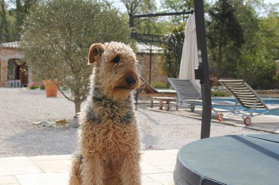 La Roque : The family dog