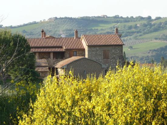 Podere del Vescovo: Ansicht von den Olivenbäumen
