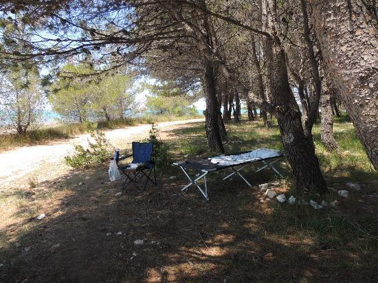 Pension Smokvica: schattiger Badeplatz unter Pinien