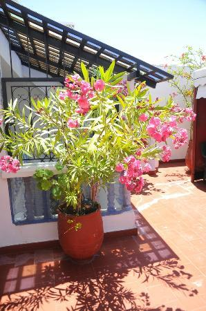 Maison d' Hotes de la Cite Portugaise d'El Jadida : Fleur en terrasse