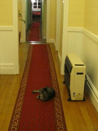 Maleny Lodge: Hallway featuring a cat!