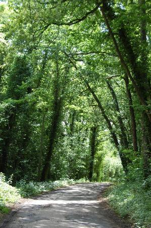French Mystique Bike Tours: riding through the forest