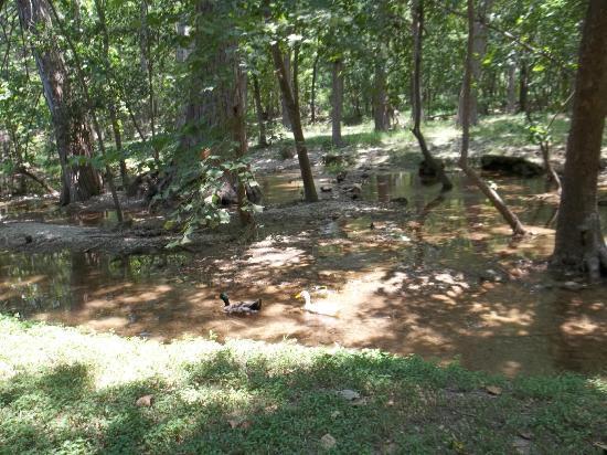 Cypress Creek Cottages: Creek