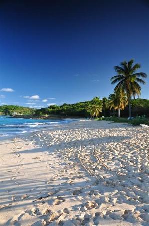 St johns nude beach valuable