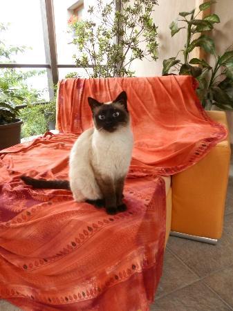 Alto Lago di Como: A very friendly resident feline
