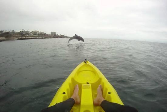 OEX La Jolla: filename__dolphin jump_jpg_thumbnail0_jpg