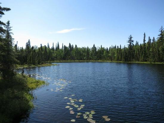 Escape for Two Bed & Breakfast: View from the deck of the Moose Cabin