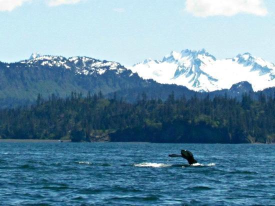 Otter Cove Resort : Humpback whale in Kachemak bay 2012