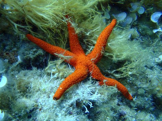 Sardinia Divers: a Sardinia Native