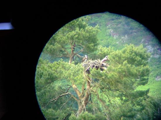 Loch of the Lowes Visitor Centre and Wildlife Reserve: View through the hide's telescope