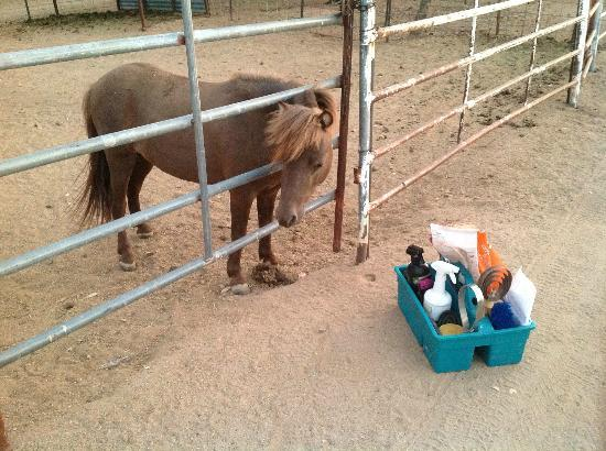 Picture Rocks Miniature Horse Ranch: Small horse or large groom box?