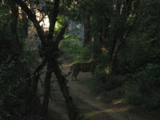 写真Ranthambore National Park枚