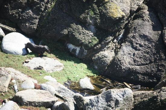 Cape Foulwind Walkway: Cape Foulwind Seal Colony