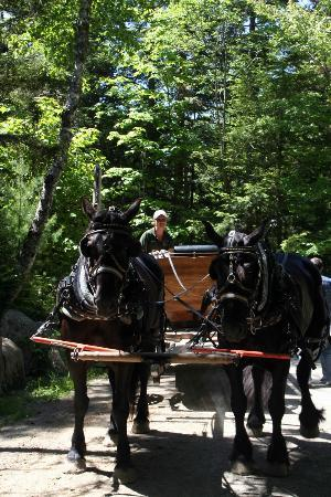 Carriages of Acadia: Katie and the carriage while riders tour Cobblestone bridge