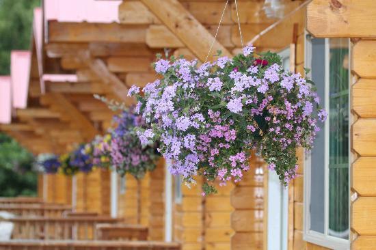 Knik River Lodge: The front porches of the quaint cabins...