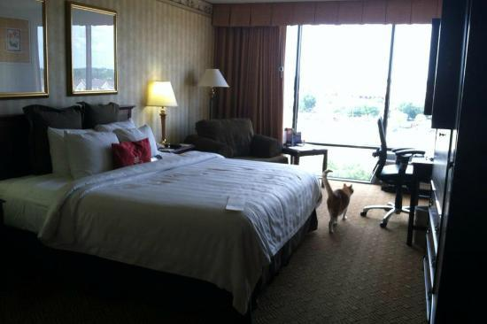 Crowne Plaza Houston - Brookhollow: My cat loved the floor-to-celing windows!
