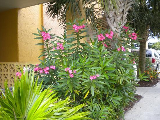 بلو جرين فاكيشنز شور كريست فيلاز أسيند ريزورت: Flowers 