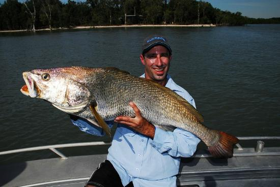 Melville Island Lodge: Jewfish caught 5 minutes from Melville Lodge