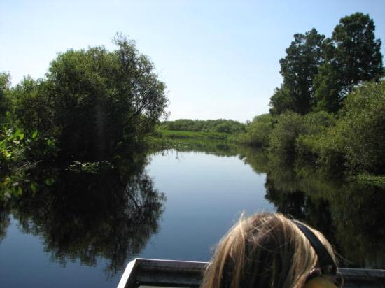 Cypress Lake Airboat Tours: Beautiful Day