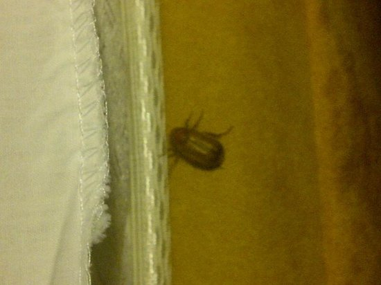 Kitchener, Kanada: Bug on my bed.