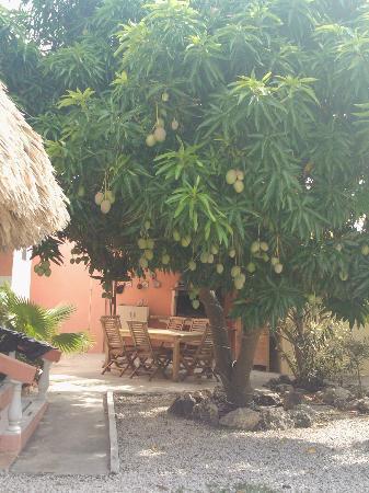 Villa Punta Salina: Mangoes Anyone?