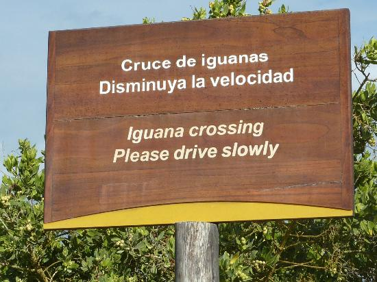 Iguana Crossing: The crossing