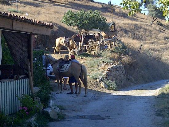 Sirince, Turquia: At binmek için bir yer vardı. Orası..