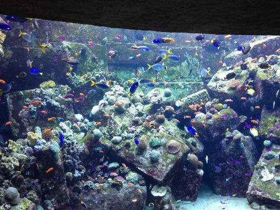 The Lost Chambers Aquarium: lost chamber atlantis 3