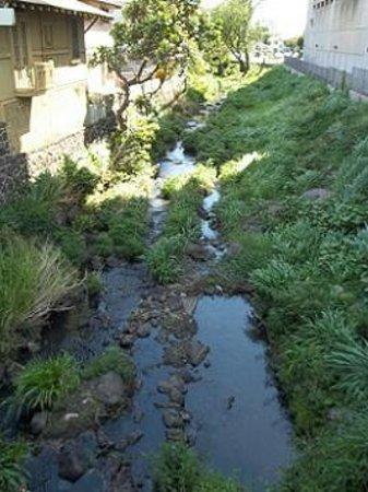 Lili'uokalani Botanical Garden: Another part of the Nu'uanu Stream.