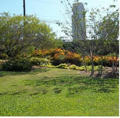Lili'uokalani Botanical Garden: Hawaiian plants in the queen's garden.