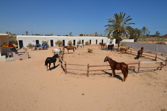 Djerba, Tunisia: getlstd_property_photo