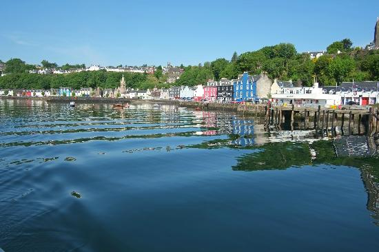 Sea Life Surveys: Heading out from Tobermory