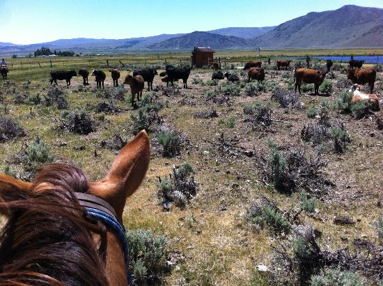 Hunewill Guest Ranch: Ready to move cattle