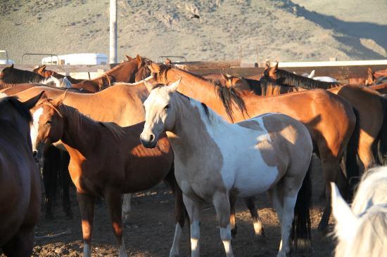 Hunewill Guest Ranch: Morning breakfast