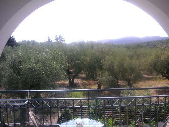 Castelli Hotel: olives!